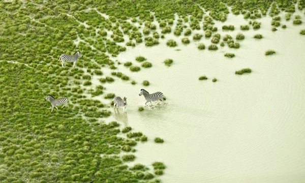 Essas fotos áreas de Botsuana são bem legais